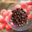 コーヒーの品種