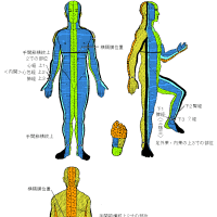 奇経八脈の宗穴の意味と身体流注区分の考察 Ver.1.6