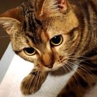 猫をお風呂に入れました。