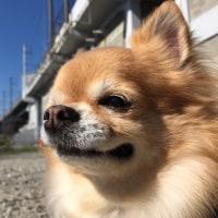 サヨちゃん初ブログ