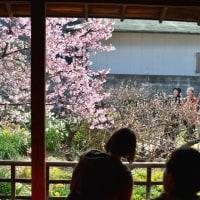 蜂須賀桜 武家屋敷