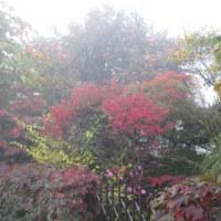 10月20日(木)濃霧の朝