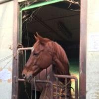 馬の仕事につくために アニベジ奮闘記 エピソード205