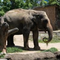 元気が一番 動物園に行って色んな動物を見た。汗もかいた・・