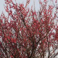 多摩川で春を感じて!