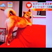 6/27 セクシーなポーズの犬