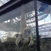 動物園でスケッチ