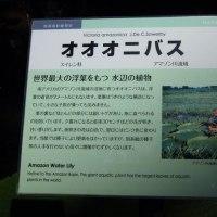 花博記念公園鶴見緑地 「咲くやこの花館」 2 (大阪市)
