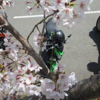 2017/04/19@お散歩