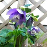 2017植え付けと種蒔き