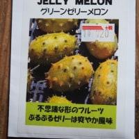 「グリーンゼリーメロン」を蒔種