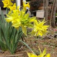 庭に花が咲き始めました