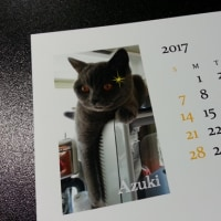 家の子カレンダー 小豆ちゃん Handmade-65