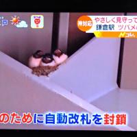 6/23 鎌倉駅のツバメは・・・・夏中いる