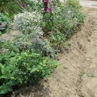 耕作放棄地からバラ園へ 2017 .6.27