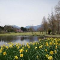 だいや川公園桜色