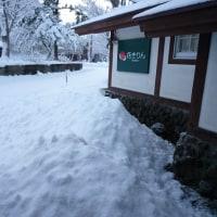 花きりん!にも、待望の雪が。12/10(土)グランデコスキー場OPEN!!