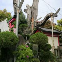 『浪速史跡めぐり』渡辺綱駒つなぎの樟・都島神社を更に西に行くと、公園と隣り合わせに