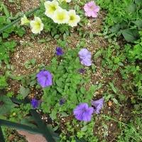 春の花から初夏の花へ(^^)/
