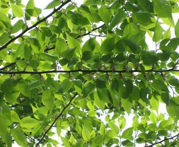 椋の樹の家 - とぎれとぎれの物語