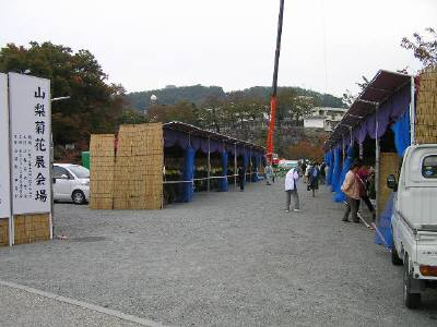 Kiku0711h
