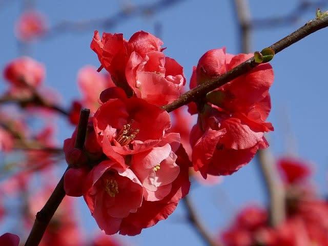 春花の画像 p1_2