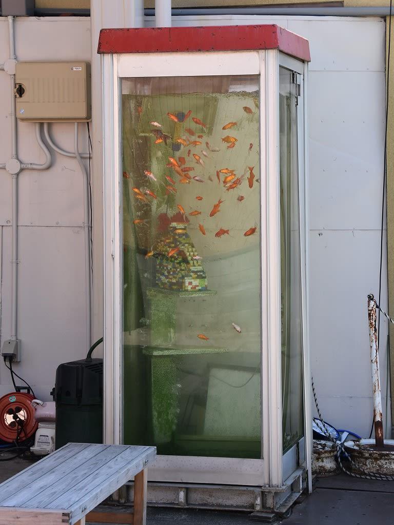 金魚ボックス