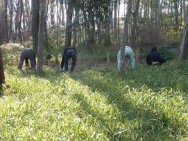 笹刈2.jpg