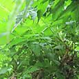 2011-5-30-1 ツル性植物