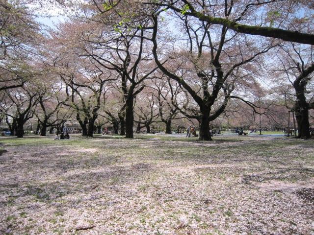 http://blogimg.goo.ne.jp/user_image/01/d1/ac9c7de262f46d0883f77bb81263b16d.jpg