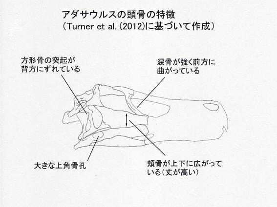 「ドロマエオサウルス科」のブログ記事一覧-肉食の系譜