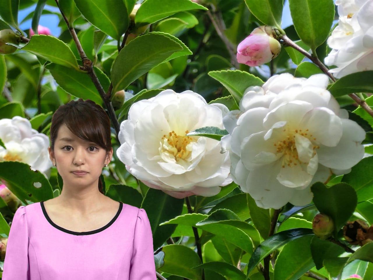 お花と後藤アナ