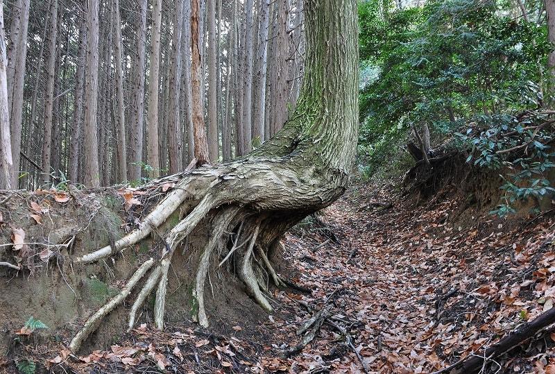 弥宮池西古墳手前の木