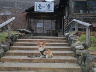 http://blogimg.goo.ne.jp/user_image/02/86/29de50a2c75e0c23e238a79b697daf98.jpg