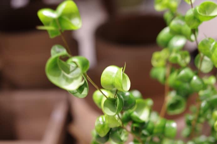 植物いろいろ入荷