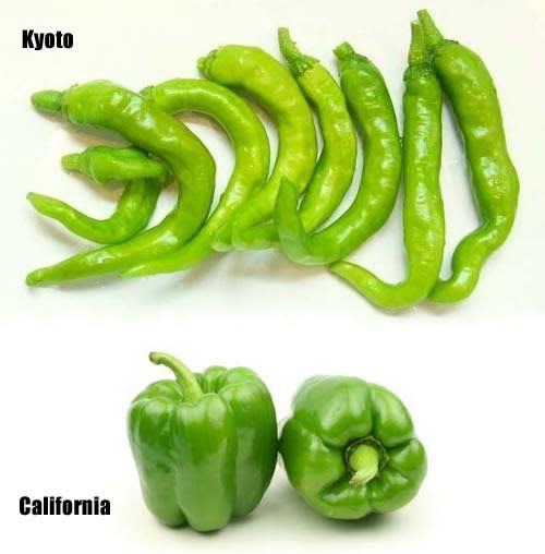 Pepper_california_wonder_and_kyoto