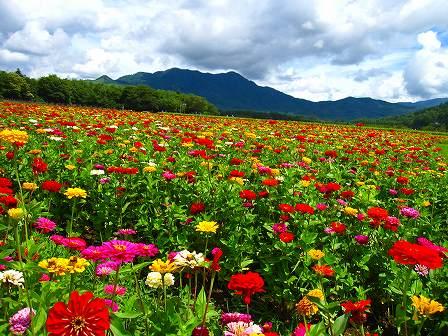 アルプスの高山植物が織り成す雲上のお花畑ではないのが残念ですが、 ...  カモシカさんの山行記