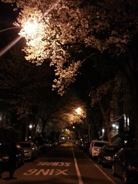 桜の瞑想と横浜ローザ