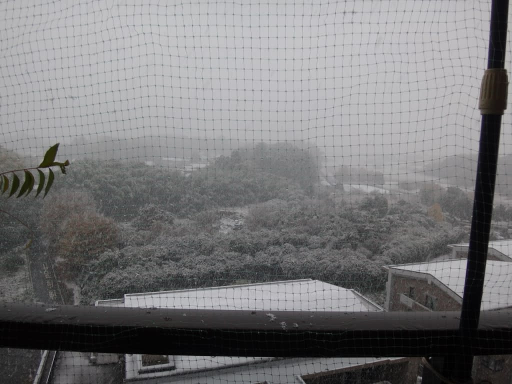 干し柿と雪