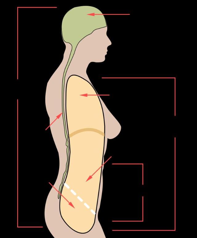 股関節と骨盤底筋群 ~骨盤のはたらき~ - 安心してください!中村です