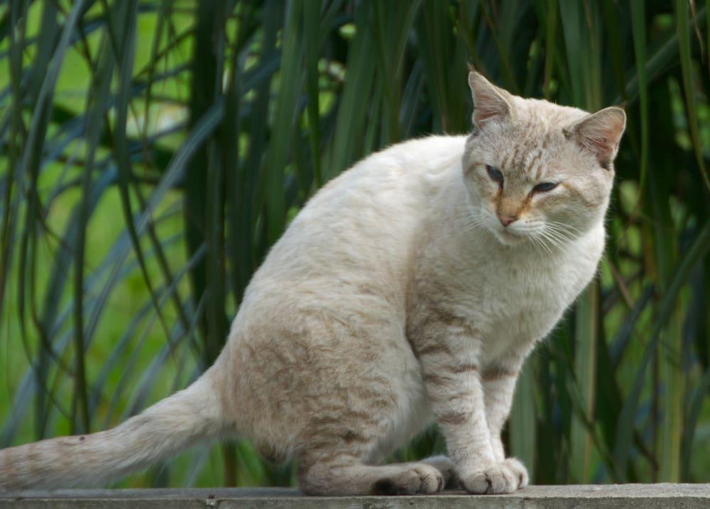 野良猫親子 子猫の捕獲・避妊手術 - YouTube