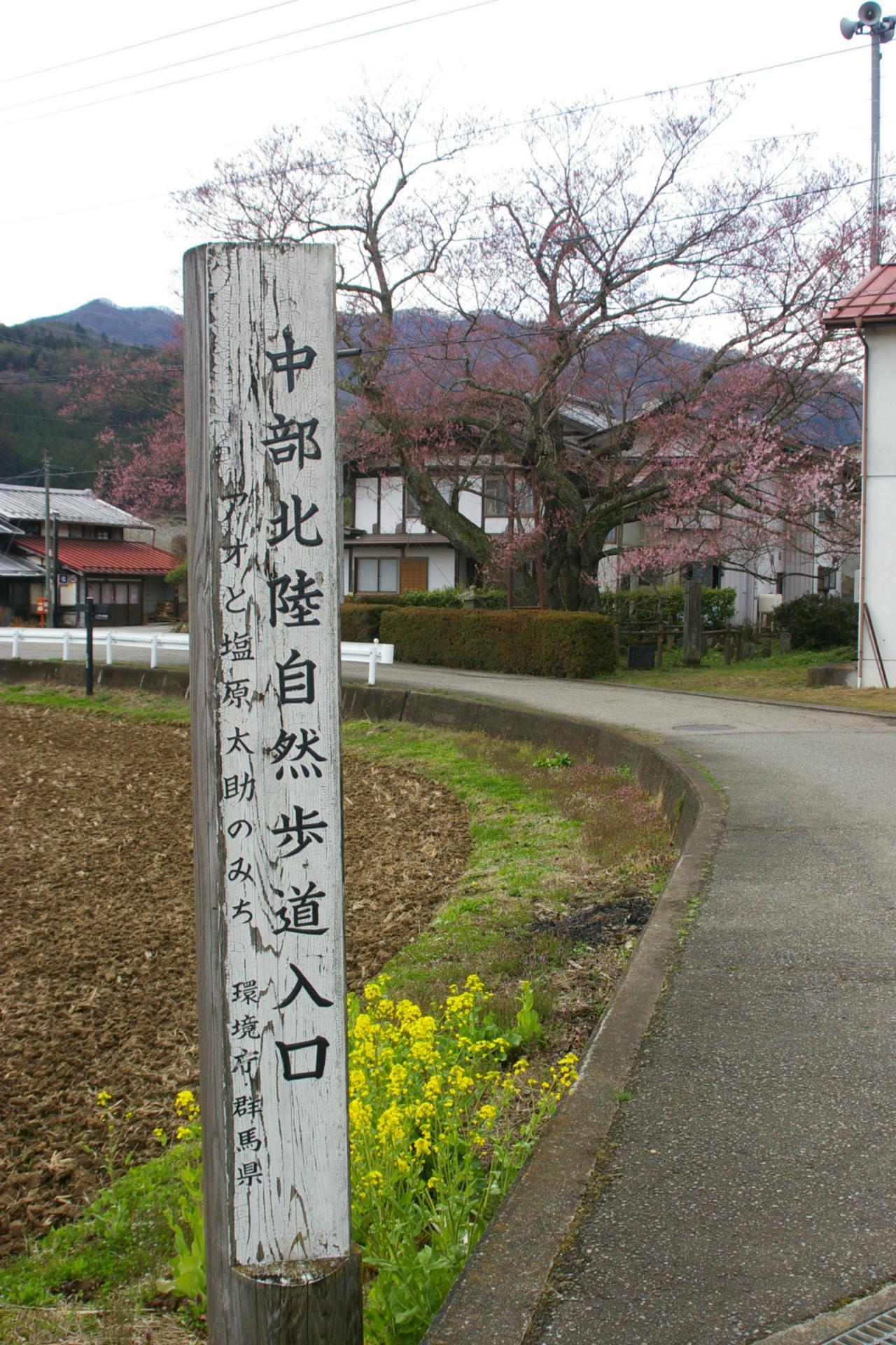 群馬県みなかみ町、上津の姥桜です!! - ビーズうさぎのハナちゃんです!!