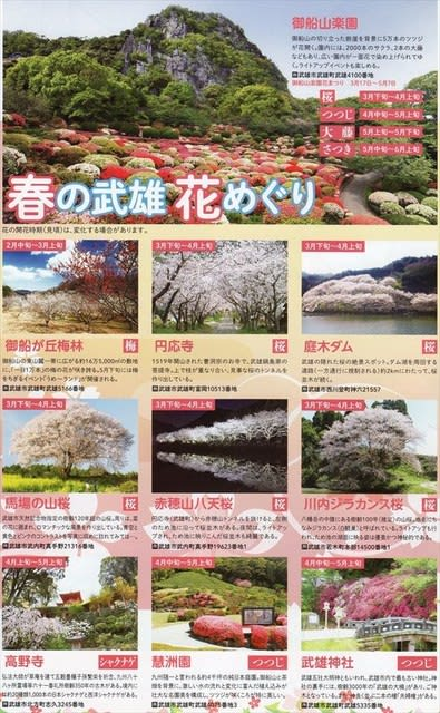 Famous spot of cherry tree in Takeo