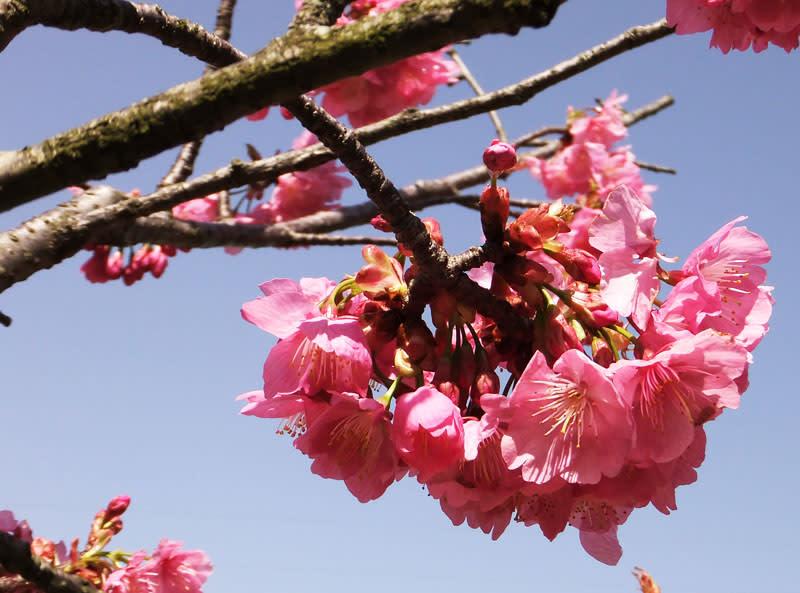 Sakura120331684