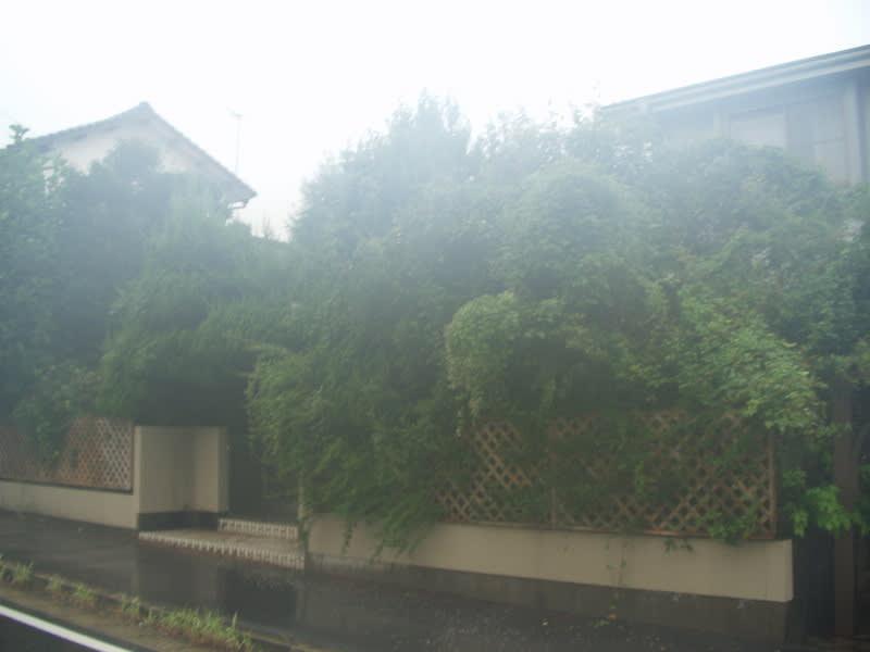 庭の維持管理 外観写真1