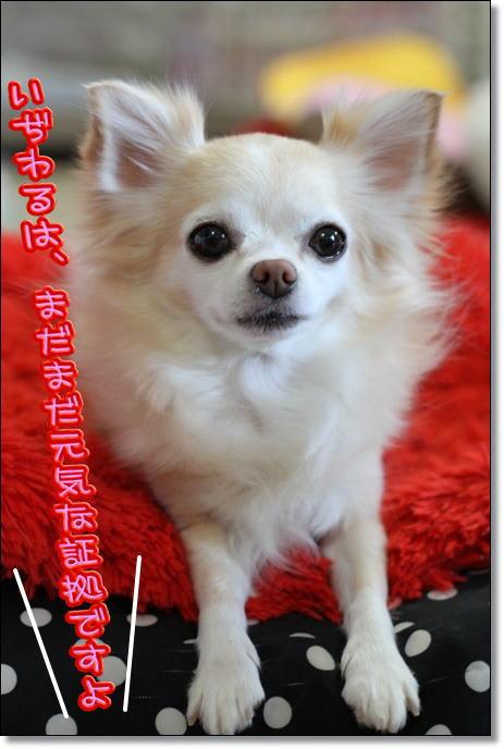 まぴ~の胆嚢粘液水腫 - せれびんのぼやき ブログ ログイン ランダム 中国、日本に「冷静な対応