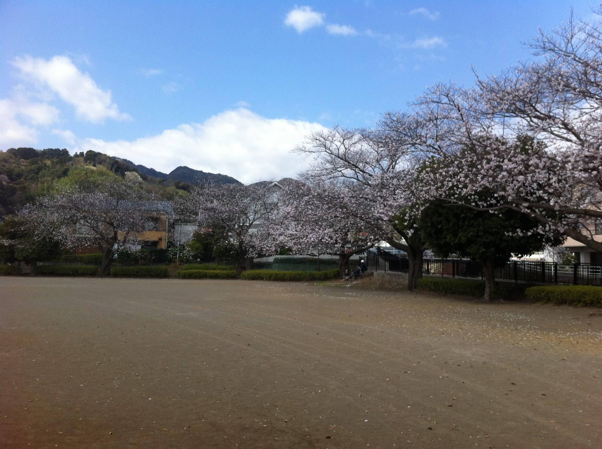 桜~郷戸公園~