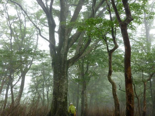 九州脊梁山脈トレイルランコース整備 - 乙女の靴音 ブログ ログイン ランダム gooアンバサダ