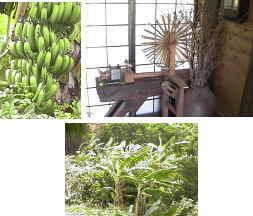 040814-banana.jpg