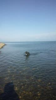 7月27日(  日)琵琶湖
